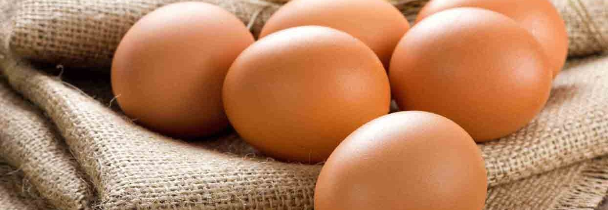 Egg processing, packaging, handling and refrigeration