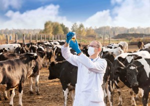 Veterinary practice farm animals
