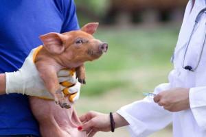 Veterinary practice pet animals